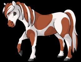Australian_Pony
