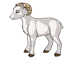 Dall_Sheep